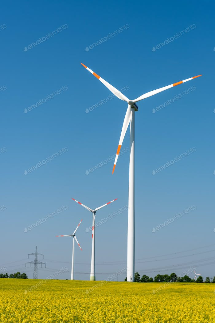 Yellow blossoming rapeseed and wind energy turbines