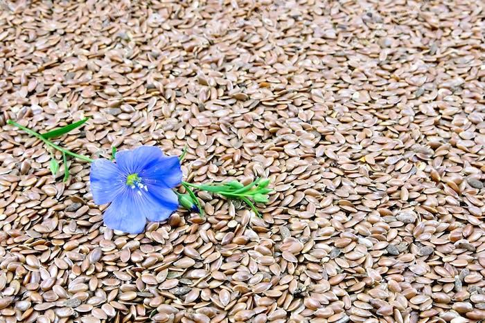 Graines de lin marron avec fleur