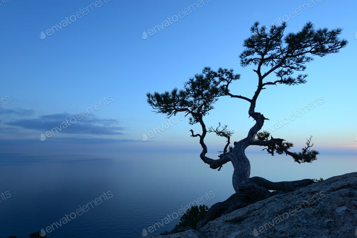 Alone tree on the edge of the cliff