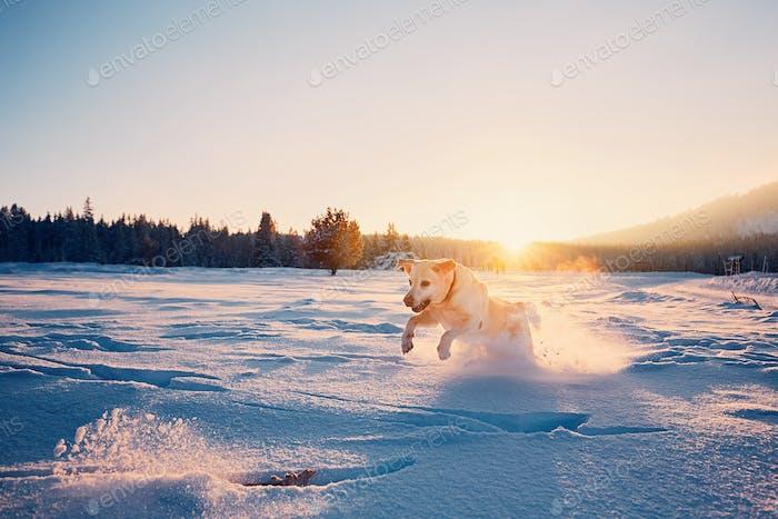 Perro en la Naturaleza de invierno
