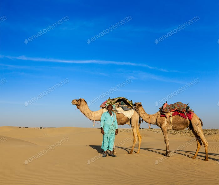Cameleer (camel driver) camels in Rajasthan, India