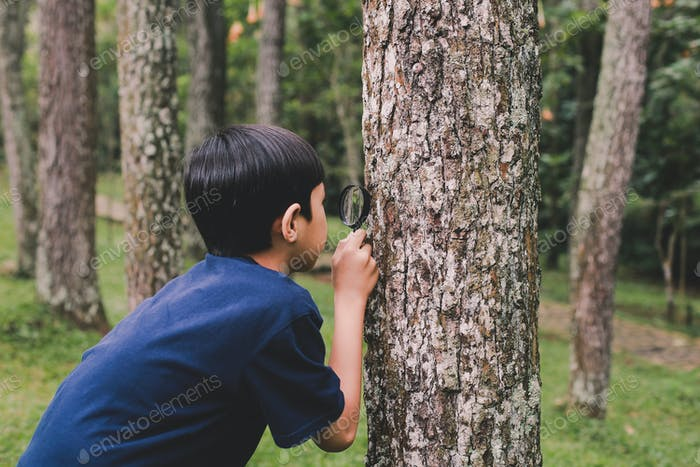 Boy Oberving Tree Trunk