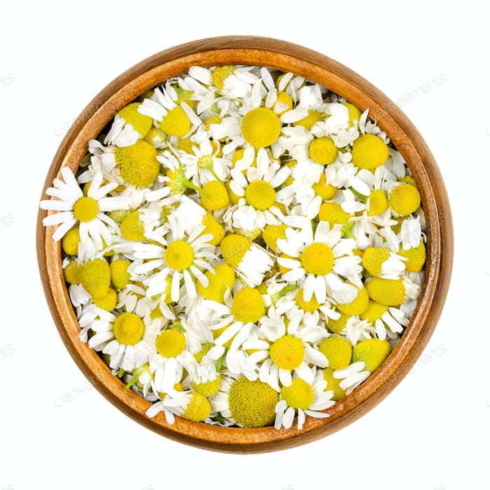 Chamomile blossoms, camomile flowers in wooden bowl