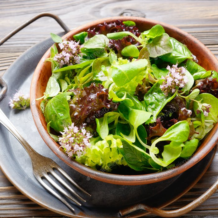 Clay dish with green and violet lettuce, lamb's lettuce salad wi
