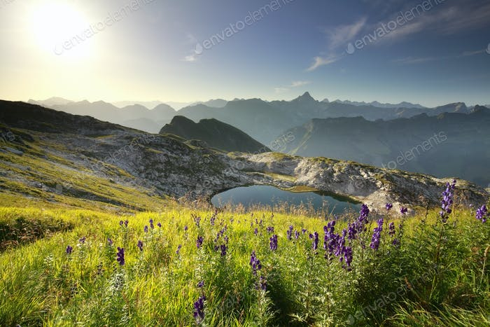 purple wildflowers over alpine lake
