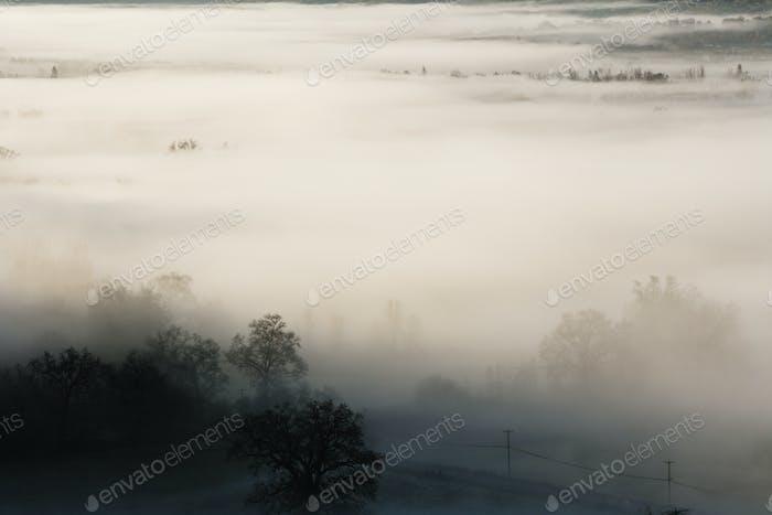 53784,Fog rolling over rural landscape
