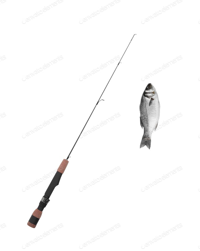 fish on fishing-rod isolated on white background