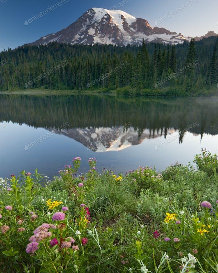 Mount Rainier, ein schneebedeckter Gipfel, umgeben von Wald, der sich in der Seeoberfläche des Mount widerspiegelt
