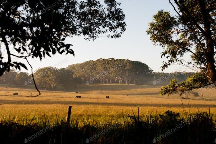 Australian Farm Land