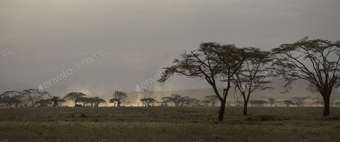 Scenic view on Serengeti National Park, Serengeti, Tanzania, Africa