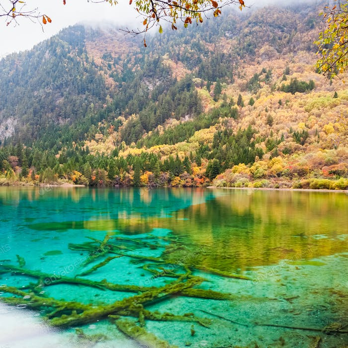 beauty autumn in jiuzhaigou closeup