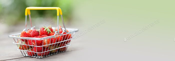 Shopping basket with ripe red strawberries. Summer fruits harvest strawberry on wooden table and