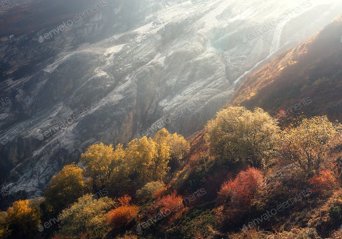 Beautiful trees on the hillside against mountains