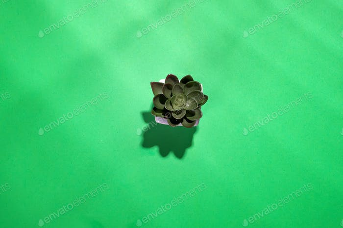 Green leaves texture isolated on green background with deep shadows, Green plant relaxation concept.