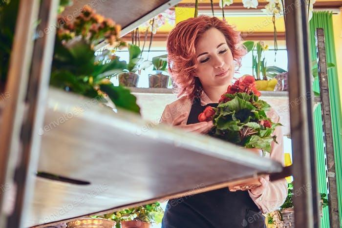 Beautiful redhead female florist wearing uniform working in a flower shop.