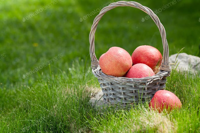Fresh garden green and red apples in basket