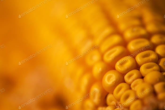 Corn maize cob