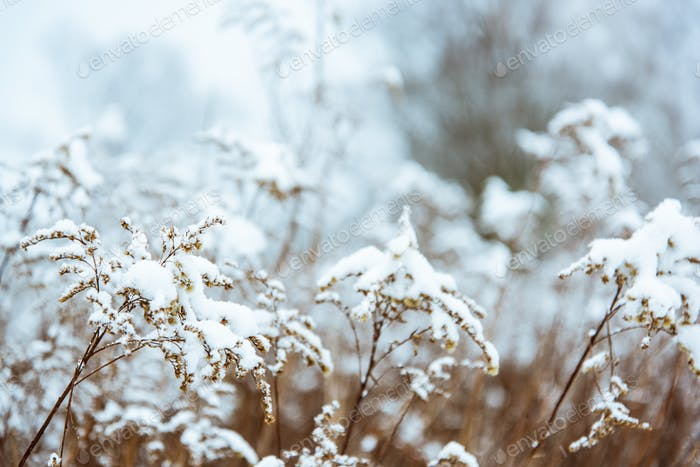 Winter background snowy bush with bokeh