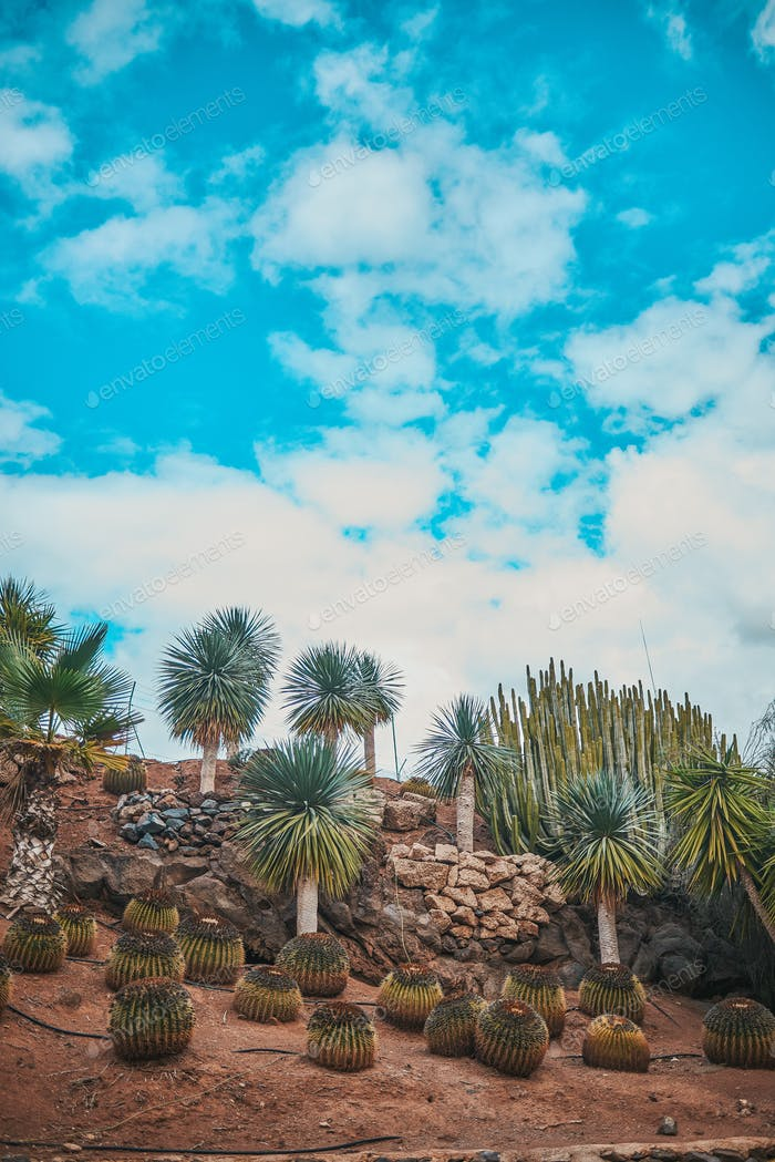 desertic landscape with palms and cactuses