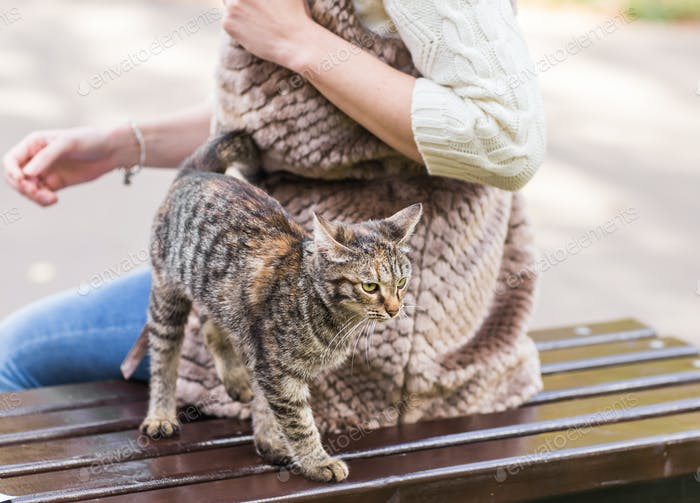 Cat sitting on a bench in the park