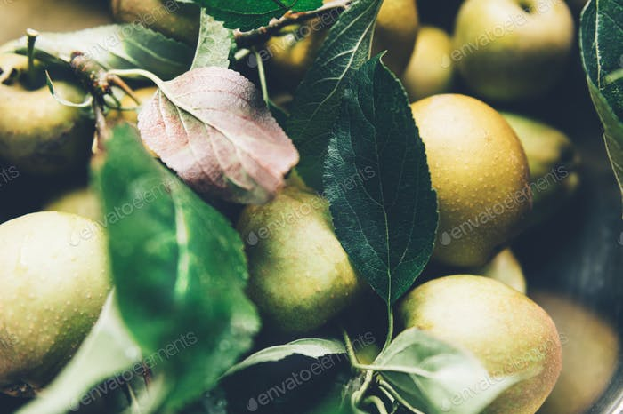 Juicy Ripe Yellow Apples