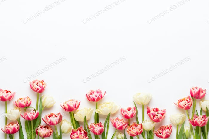 Spring flowers. Tulips on pastel colors background.