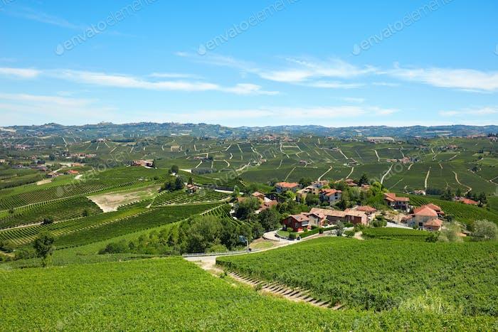 Green vineyards, Langhe hills in Piedmont, Italy