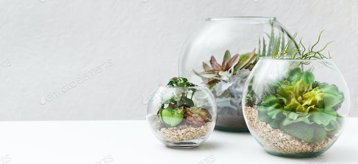 Succulent plants in florarium vases, copy space