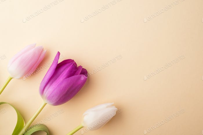 Flowers on a beige background.