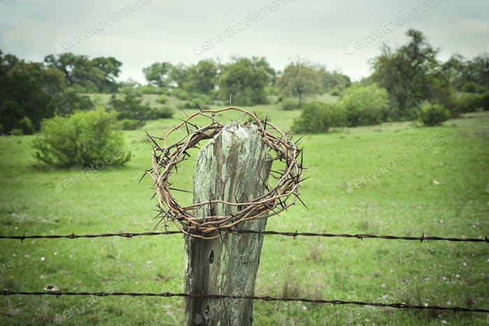 Crown of Thorns on Fence Post in Texas Hill Country
