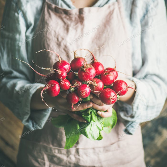Female farmer holding bunch of radish with leaves, square crop