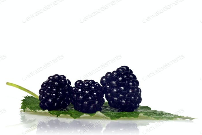blackberry with green leaf isolated on white