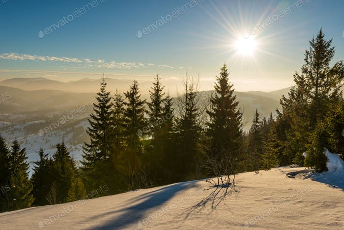 Beautiful view of majestic green spruce trees
