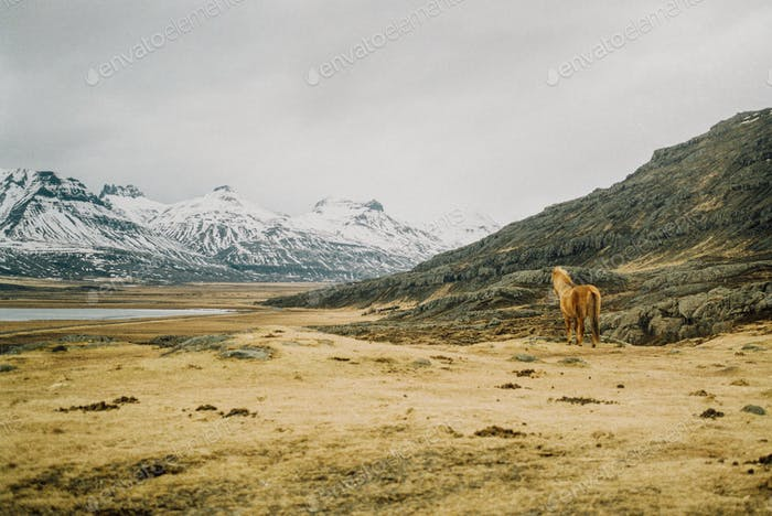 A Horse Surveying his Land