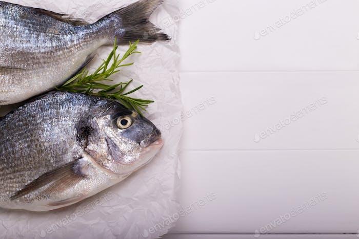 roher Seebrassen Fisch