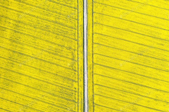 Aerial drone view of ground road in yellow fields