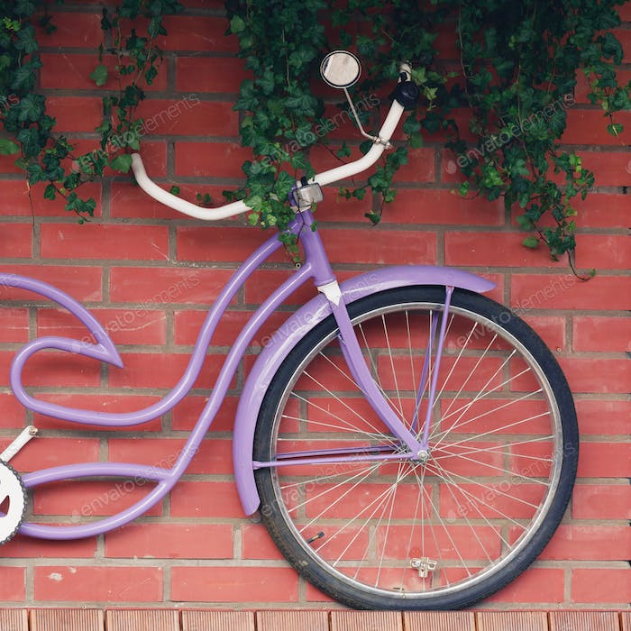 A lilac vintage bicycle hangs on a brick wall. Decor concept.