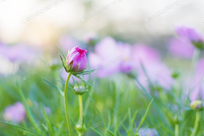 Pink flower buds with a refreshing