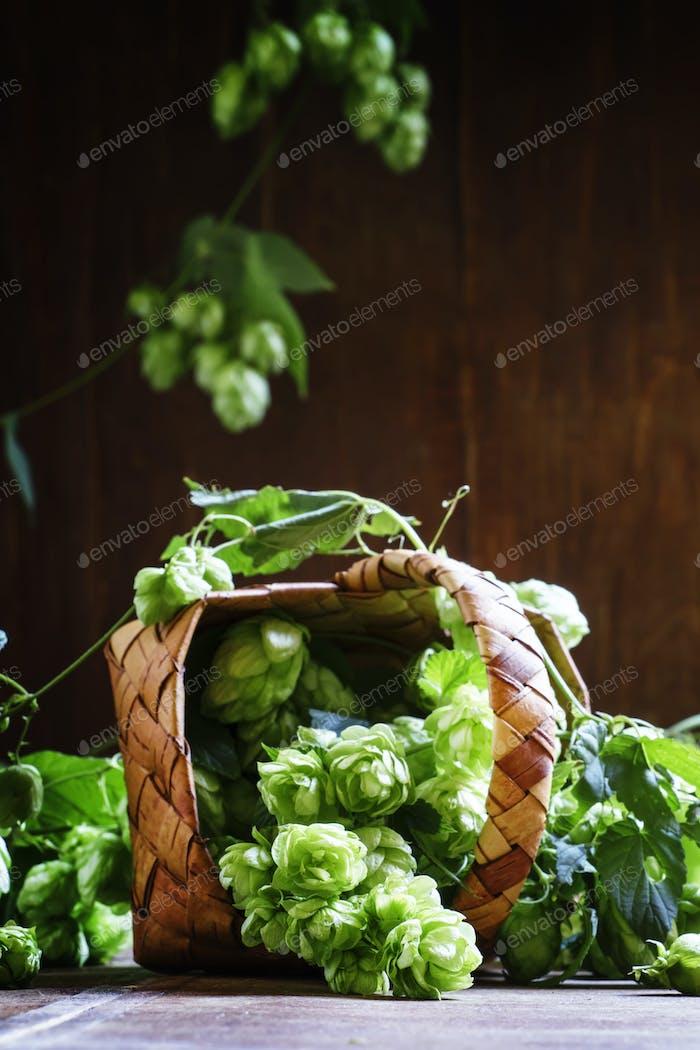 Fresh hop cones in a wicker basket
