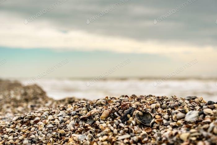 the coastline of seashells