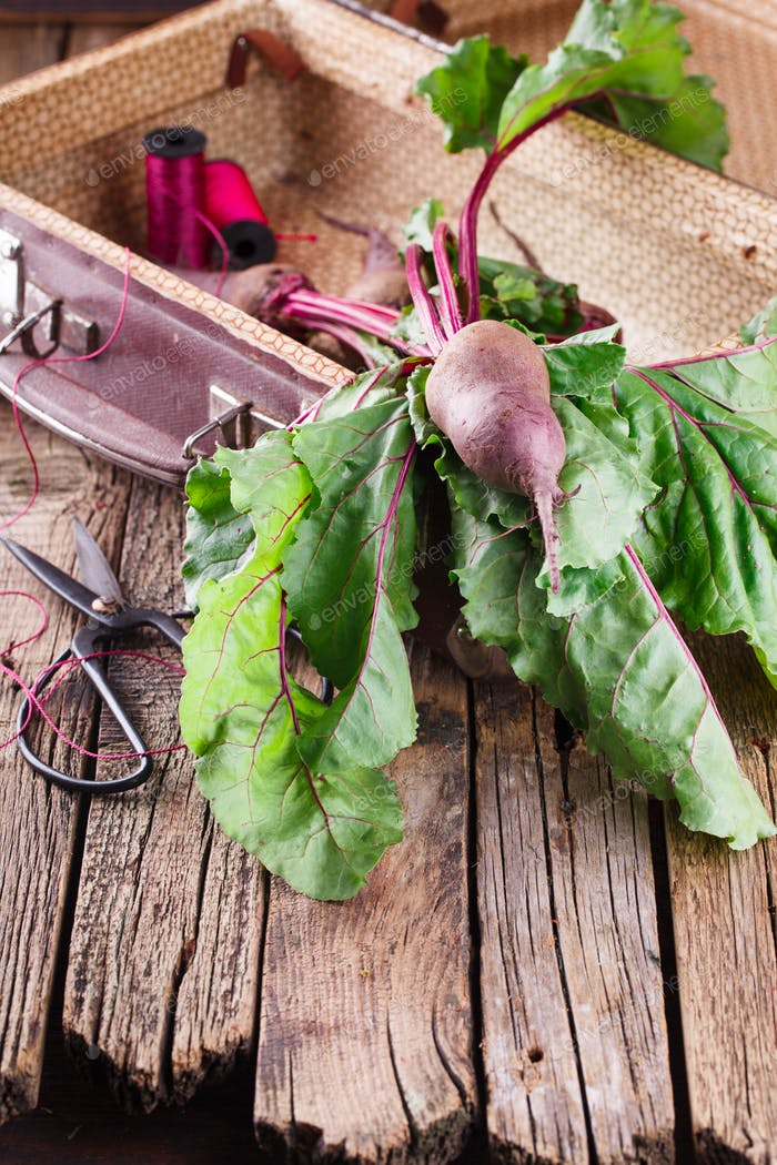 Bunch of Baby Beets with foliage