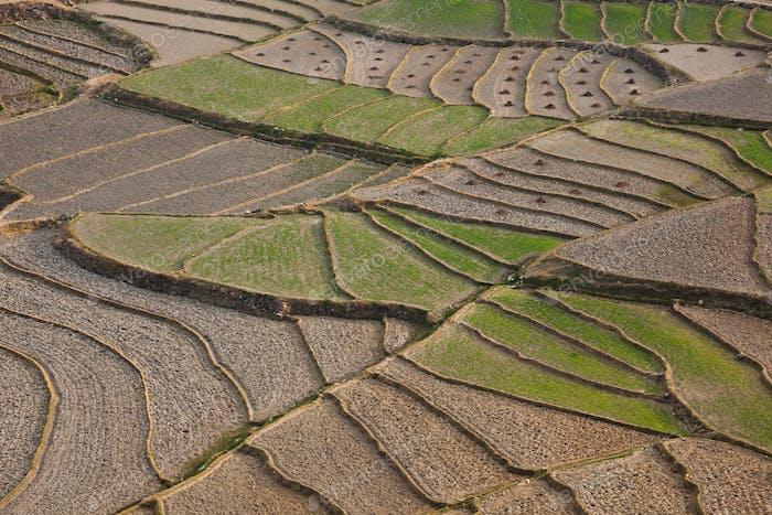Cultivated terraced fields, Paro Valley, Bhutan