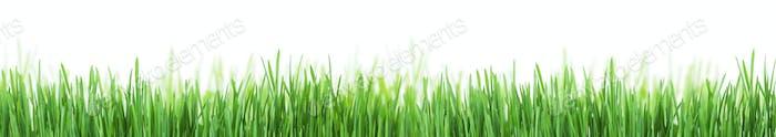 Abstrakte sonnige Grasstruktur