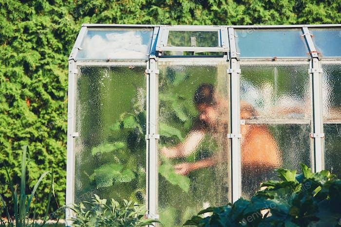 Work on the vegetable garden