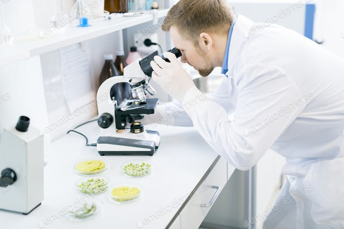 Male scientist studying green vegetables under microscope