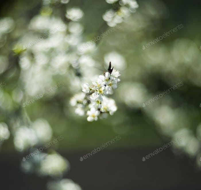 Schöne Frühlingsblüte