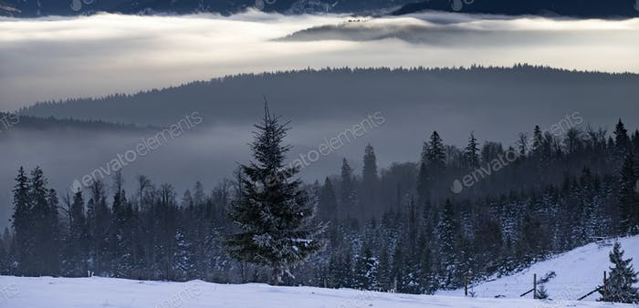 Winter forest in dramatic sunrise with fog in the Carpathians, Romania.