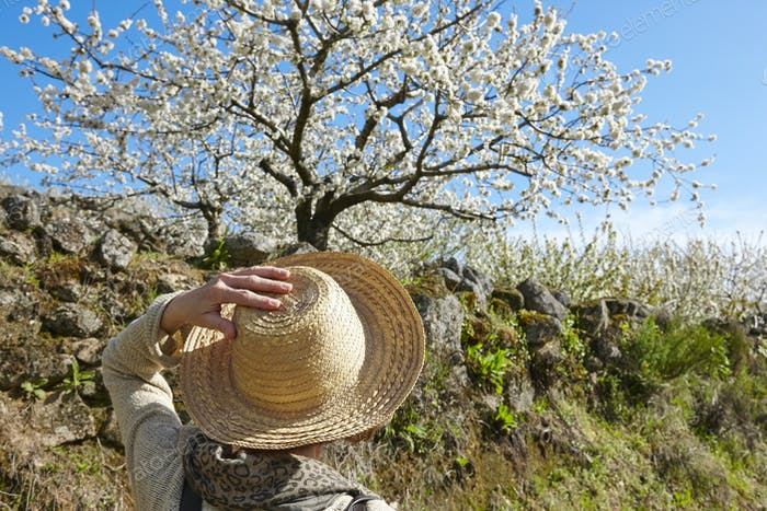 Woman looking cherry blossom. Jerte Valley, Caceres. Spring in Spain
