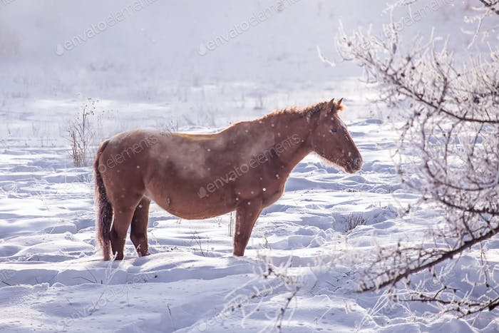 One brown Horse stay in the snowy woods in winter