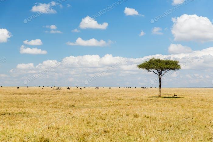 arbre et troupeau d'animaux dans la savane en afrique